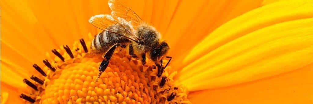 la picadura de la abeja